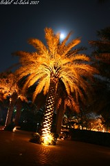 :) (NaWaFoOo) Tags: canon photo pic kuwait  q8 nawaf artphoto     alsaleh  nawafooo elsaleh  kuwaitartphoto kuwitart