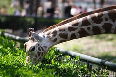 3502653842 (xvision) Tags: animal canon zoo 135mmf2l