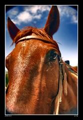 rsmPORTFOLIOponcho (Ryan McKee) Tags: horse mckee newmexico d50 nikon angle ryan wide wideangle 18mm