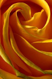 Yellow Whirl