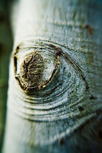 The Tree is Crying… Because it Knows What You Did Last Summer