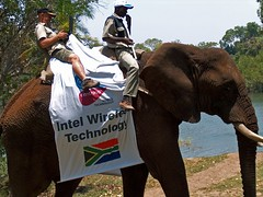 What a Virtual Office! (hannes.steyn) Tags: africa friends nature water animals wildlife intel rivers elephants zambia zambeziriver joubertdelange thorntreelodge hannessteyn