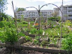 urban community garden, vancouver