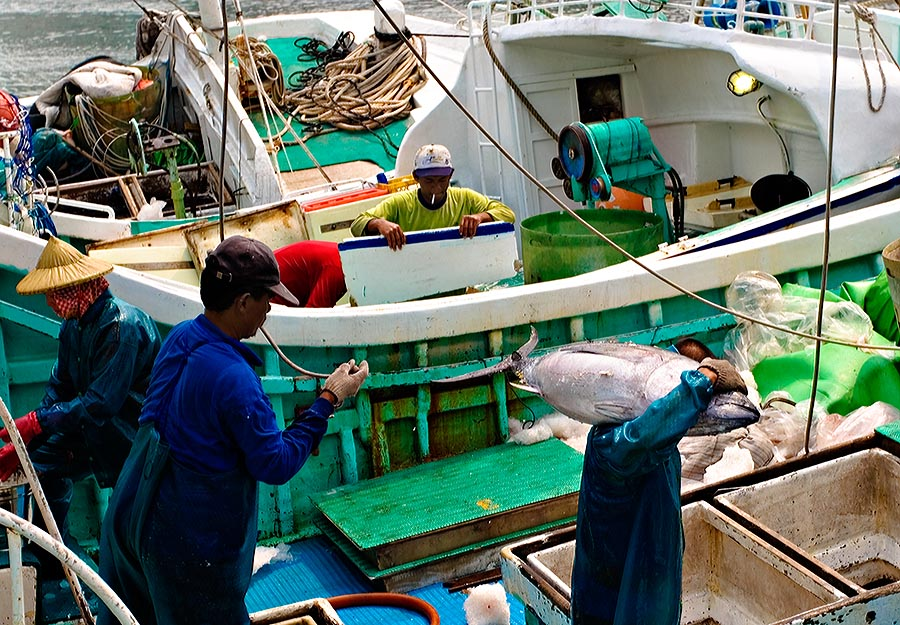 Taiwan's Fishing Industry