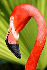 Flamingo (C J N photos) Tags: pink flamingo workshop tamron audubonzoo 200500mm dongale anawesomeshot