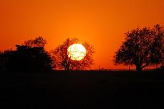 10/52 Sunset off some back road close to Lansing, KS (catastrophy) Tags: trees sunset sky orange sun tree silhouette lansing kansascity kansas week10 somewhere leavenworth jesters thebigone 52sunsets superhearts