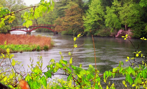 little red bridge in Wellesley