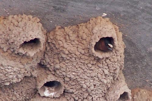 Get Rid of Mud Daubers: Open Pipe Mud Dauber Removal
