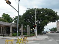 Fleming Oak