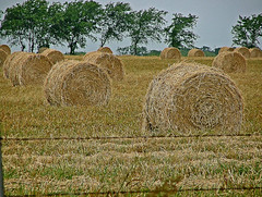 Hay (Texas Finn) Tags: ranch sky field rural fence wire texas farm palestine country straw round barbedwire feed hay bales barb bale livestock barbed rees haybales crowley mowed cultivated roundbales roundbale