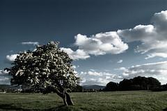 splitting tree - by dafuriousd