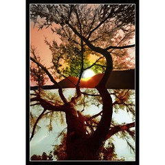 For You (mac_raw) Tags: color tree landscape bravo searchthebest flickrfriends interestingness5 interestingness4 supershot magicdonkey instantfave beautyisintheeyeofthebeholder outstandingshots flickrsbest tamron180mm abigfave nikond80 shieldofexcellence anawesomeshot impressedbeauty superaplus aplusphoto flickrhearts irresistiblebeauty superbmasterpiece goldenphotographer wowiekazowie diamondclassphotographer flickrdiamond macraw cookielicious