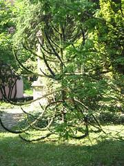 pinetto (ariannaCIM) Tags: pavia ortobotanico cim07