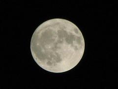 The Real Blue Moon (NavneethC) Tags: sky moon india rabbit night hare madras may folklore luna fullmoon astronomy chennai myth bluemoon 2007 tonightsmoon