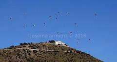 IMG_3980 marca (Josema Armero) Tags: sierradearas lucena campoleli parapente