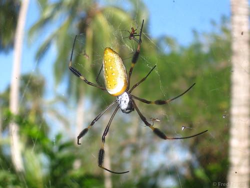 Araña gigante Parque Tayrona