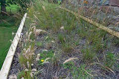 Wild flower and grass roof (Wildroof Landscapes) Tags: cumbria wildflowers greenroof