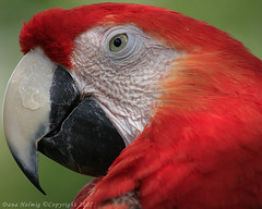 Parrot (horizonsmoon1) Tags: people cats bird nature birds animals canon florida wildlife parrot snakes lizards parrots reptiles hawks centralflorida zoosofthesouth squarrels firsttheearth avianexcellence