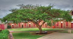 Pretty tree inside Fort Schanskop