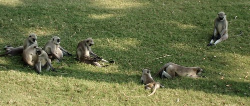 Monkeys resting on the grass