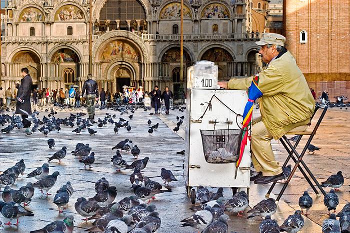 Broke Pigeons