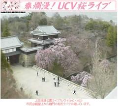 櫻花五分開! 20070402上田城跡公園