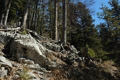 d0701016 (m-klueber.de) Tags: winter tirol alpen 2007 naturpark karwendel montan bergwald nadelwald pleisenspitze karwendelgebirge ostalpen alpenpark sptwinter nordalpen 20070406 mk2007pleisen2 lablehner mkbildkatalog