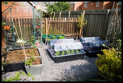 Garden/Allotment.