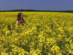 Field Of Rape (Joe Shlabotnik) Tags: flowers france yellow rape sue myfave canola 2007 rapeseed faved colza explored april2007 justsue heylookatthis