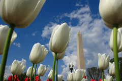 Washington Monument & White Tulips (ehpien) Tags: sky clouds canon washingtondc spring bravo wdc tulip 5d washingtonmonument peopleschoice blueribbonwinner abigfave 1224sigma colorphotoaward impressedbeauty superbmasterpiece beyondexcellence diamondclassphotographer flickrdiamond bratanesque april292007