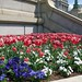 Flowerbed at Library of Congress