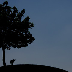 In solitude (cattycamehome) Tags: life uk blue black tree beauty silhouette tag3 taggedout landscape spring bravo solitude tag2 all loneliness tag1 sheep dusk quote derbyshire hill  rollins appreciation lilac rights lamb isolation enlightenment reserved henryrollins catherineingram notamacro supershot photophilosophy may2007 abigfave artlibre cattycamehome goldenphotographer allrightsreserved cfjune