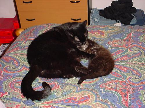 [Gimi Grooming a Kitten]