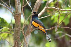 Lamanai bird