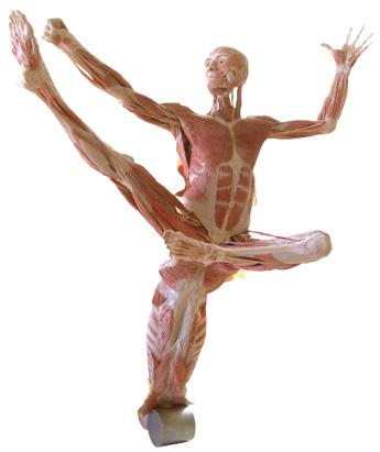 Body Worlds Dancer