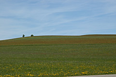 sheep's sorrel (claude05) Tags: auburn blackforest rumexacetosella 3waychallenge weissenbachtal schnwald