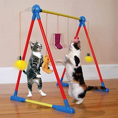 Kitty Kat Circus Gym