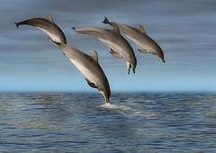 Dolphins (chatallot) Tags: water photoshop bravo diving creation dolphins playful flipper seaward mywinners superaplus aplusphoto firsttheearth bestofaustralia