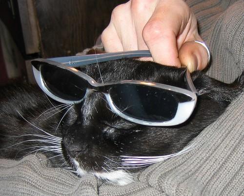 zelia glasses