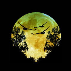 to night (tuna_firarda) Tags: moon tree bird night ay gece aa goldenphotographer
