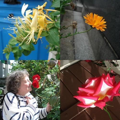 Sentir les fleurs sur notre chemin