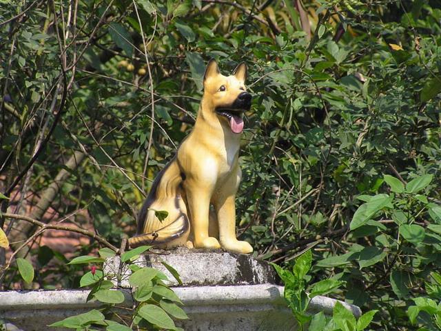 Chó Vàng