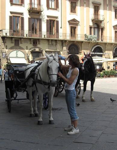 passione per i cavalli