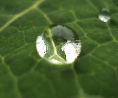 Refraction ! (dritzdcool) Tags: water droplets drops dew refraction rainwater naturesfinest superhearts
