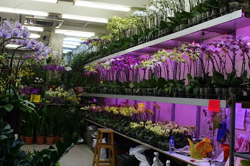 Orchids in the Flower Market