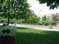 Picnic at York University