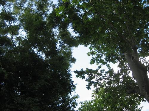 (.29-5) looking up ahead