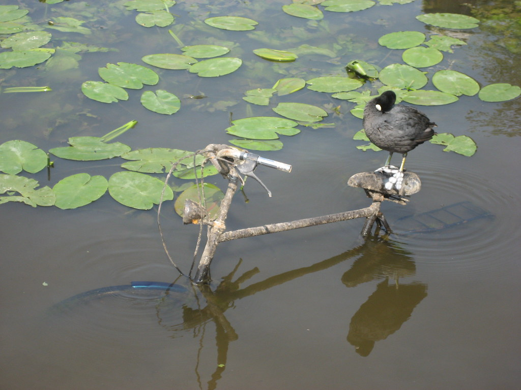 water bird riding a bicycle