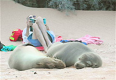 Chiilin Out (beccafromportland) Tags: friends brazil eye beach dick sandy relaxing galapagos explore seals retired notmyphoto beautifulearth blueribbonwinner anawesomeshot