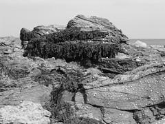 Seaweed and rocks, Scarborough (Boudica_) Tags: white black seaweed beach pho